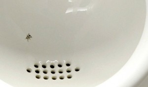 toilet_fly_03